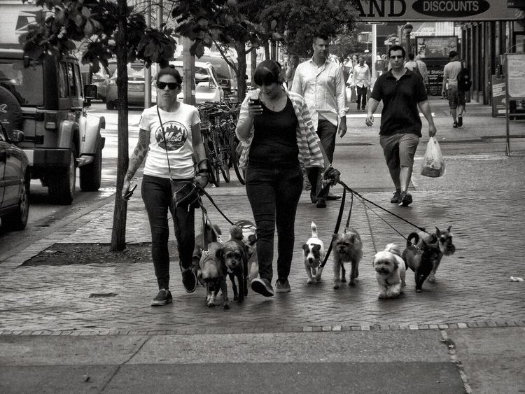 Streetphotography_bw NYC, Dogwalker