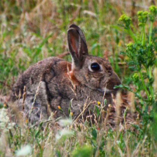Rabbit taking a rest 🐇 Summer Wildlife The Great Outdoors Love Animals Nature Nature_collection Rabbit Ig_countryside