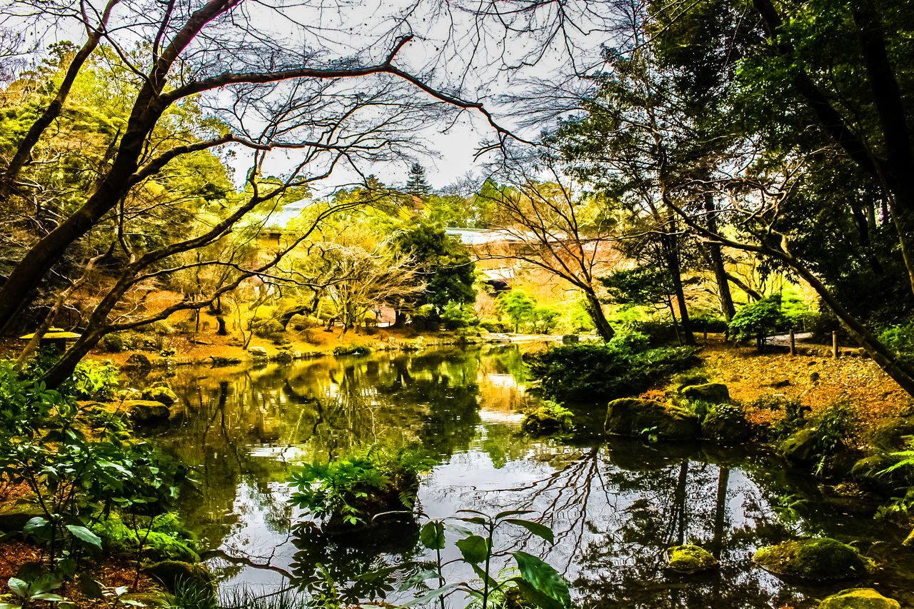 tree, reflection, nature, growth, water, lake, branch, leaf, tranquility, beauty in nature, day, outdoors, no people, standing water, tranquil scene, scenics, forest, plant, lily pad, sky