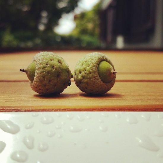 Oak Mast Acorn Orchardsteakcollection meşepalamudu