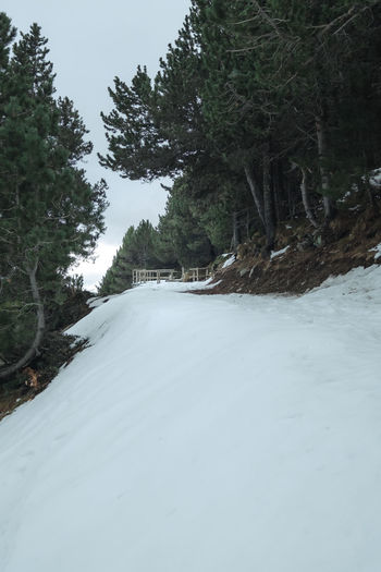 Snow covered road amidst trees in forest against sky