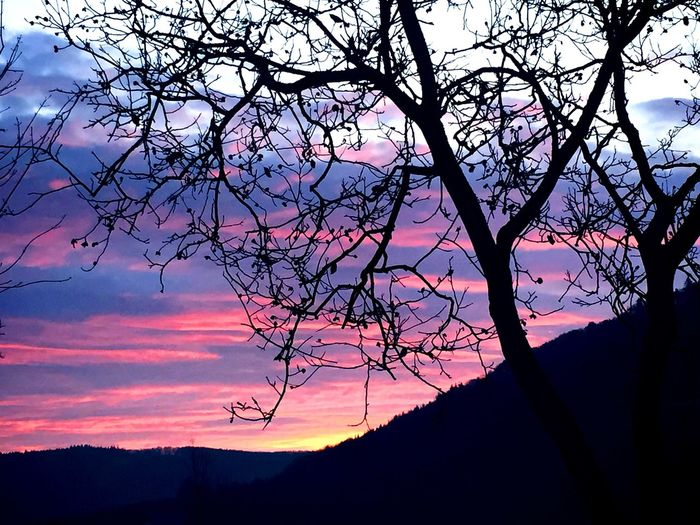 Sky Silhouette Tree Sunset Plant Beauty In Nature Cloud - Sky
