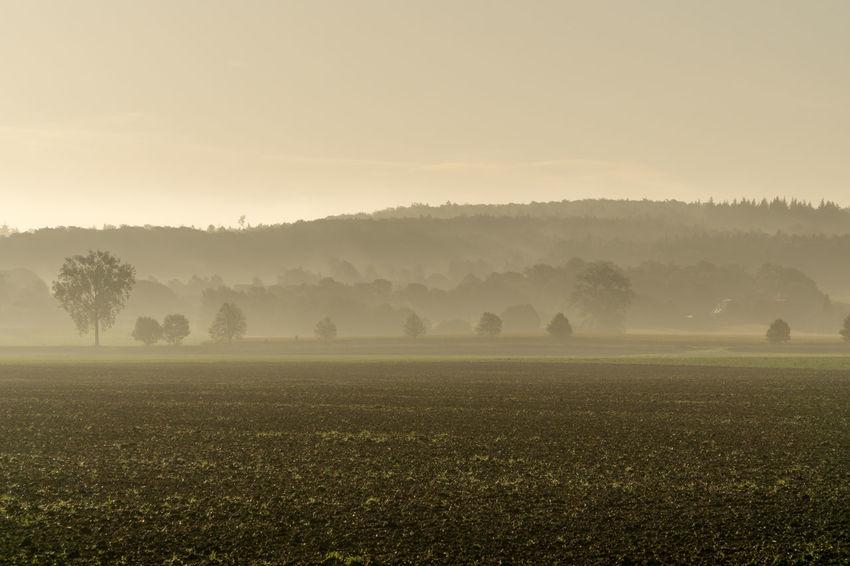 Braun Bäume Feld Field GERMANY🇩🇪DEUTSCHERLAND@ Heaven Himmel Nature Nebel Schaumburg Sonnenuntergang Vornhagen Baum Brown Fog Niedersachsen Sky Sunshine