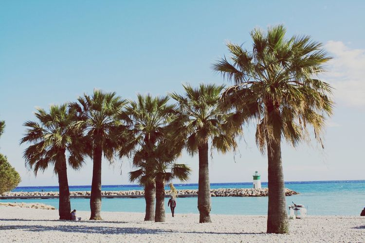 Palm Tree Beach Tree Water Sea Tranquil Scene Horizon Over Water Shore Tree Trunk Growth Blue Nature Beauty In Nature Solitude Tall - High Day Tranquility Scenics France Nice View Beauty Beauty In Nature Eyemphotography EyeEm Nature Lover