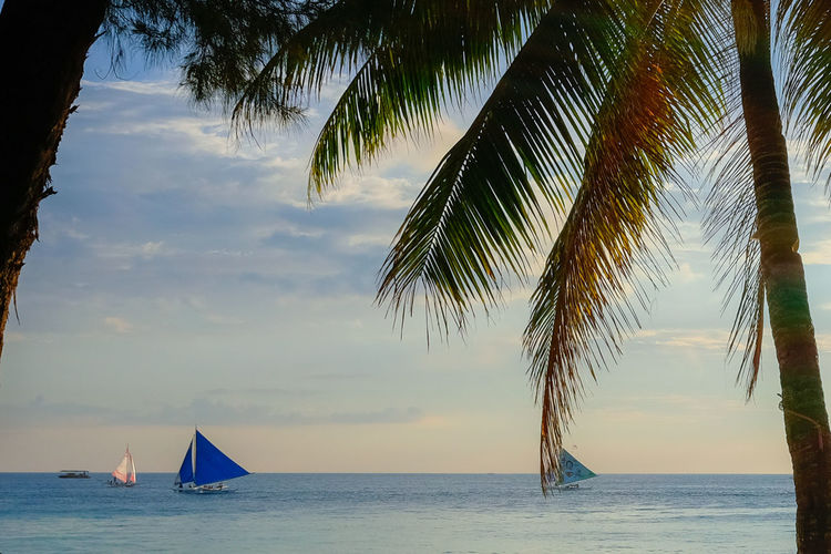 Beauty In Nature Cloud - Sky Horizon Horizon Over Water Mode Of Transportation Nature Nautical Vessel No People Outdoors Palm Leaf Palm Tree Plant Sailboat Scenics - Nature Sea Sky Tranquil Scene Tranquility Transportation Tree Tropical Climate Water