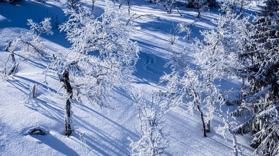 Marcweberde Cold Temperature Winter Snow Tree Nature Land Scenics - Nature Beauty In Nature Plant White Color Mountain Day Blue Non-urban Scene Landscape Tranquility Forest Tranquil Scene No People Outdoors Ice Mountain Peak Snowcapped Mountain