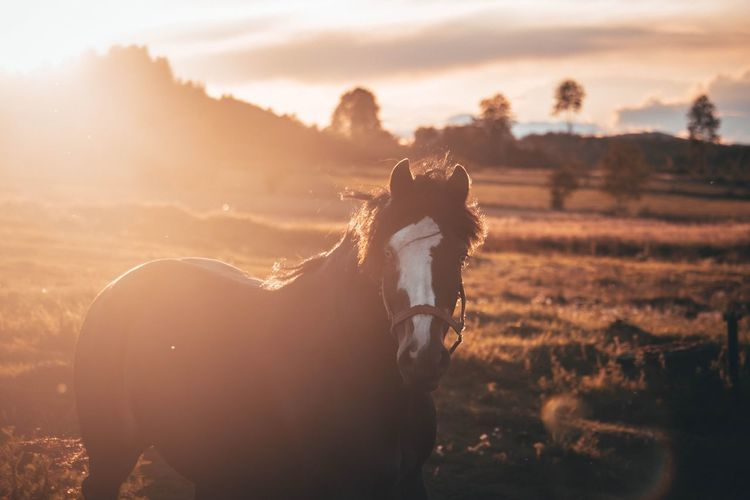 View of horse on field during sunset