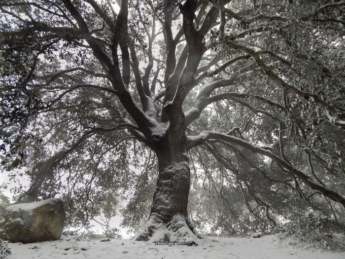 Tree Nature Growth No People Tree Trunk Tranquility Scenics Snow