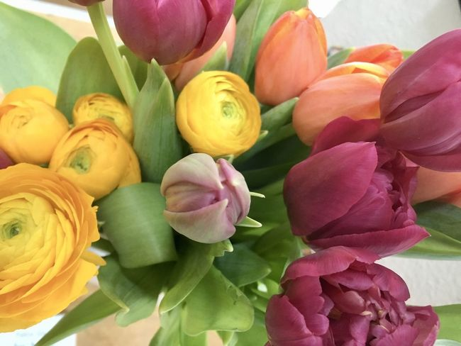Tulips Beauty In Nature Close-up Day Flower Flower Head Fragility Freshness Indoors  Leaf Multi Colored Nature No People Petal Pink Color Rose - Flower Tulip