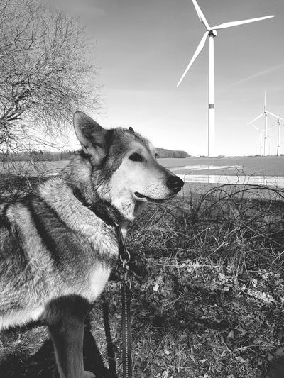 old friend BW_photography Old Friendship Forrest Happyness Friendship Freedom Country Life Sarloos Wolfhound Germany Home Beautiful Day Pets Fuel And Power Generation Farmland Agricultural Field