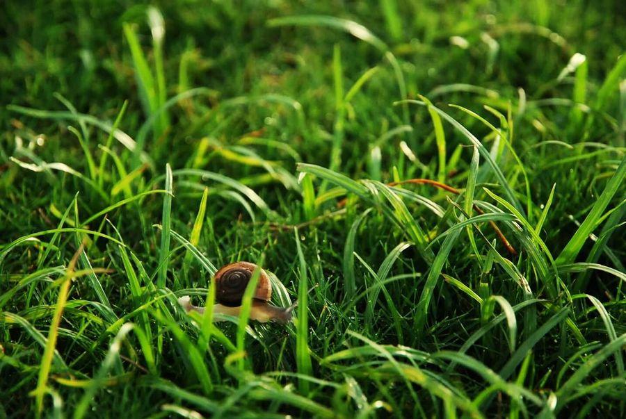 Hello World Forever Alone Ladyphotographerofthemonth Spacetime Needsomeonetoshare Needsomeonetolove Macro_collection Macro Nature Macrogardener Macrophotography