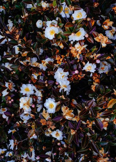 Full frame shot of tree during autumn