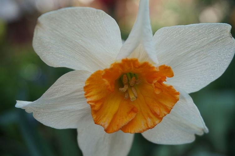 Flowers Flowers Petals🌸 Sprig Spring Springtime