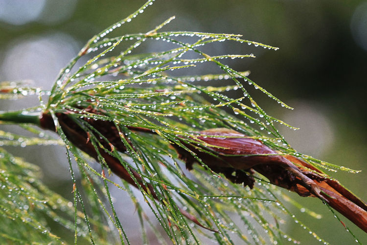 Close-up of wet plant