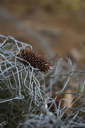 Close-up of caterpillar on dry grass