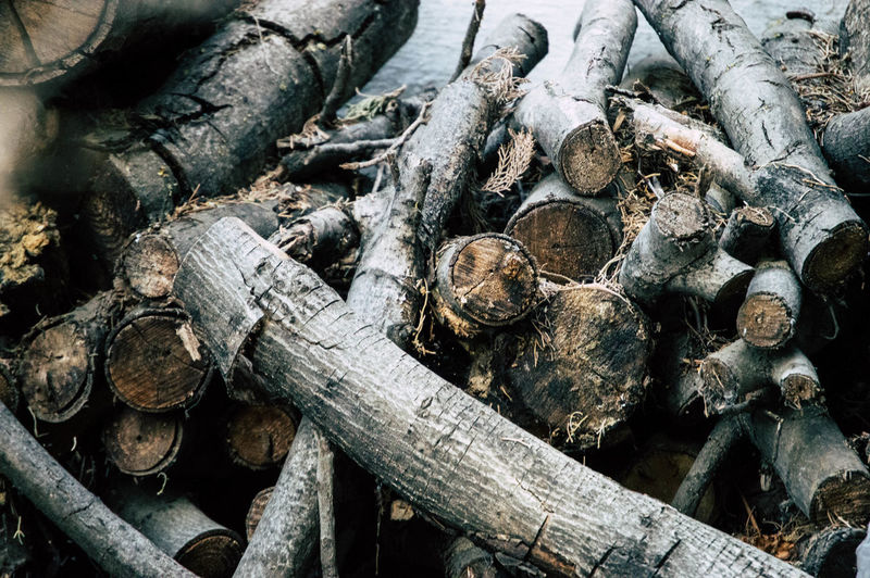 High angle view of logs in forest