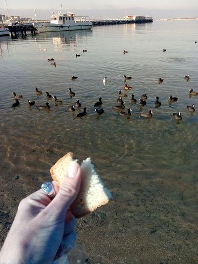 Ducks on water at beach