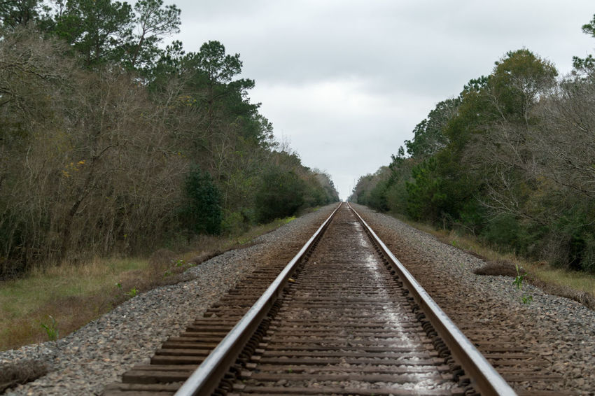 Railroad tracks in the woods Beauty In Nature Day Nature No People Outdoors Rail Transportation Railroad Track Sky The Way Forward Tree