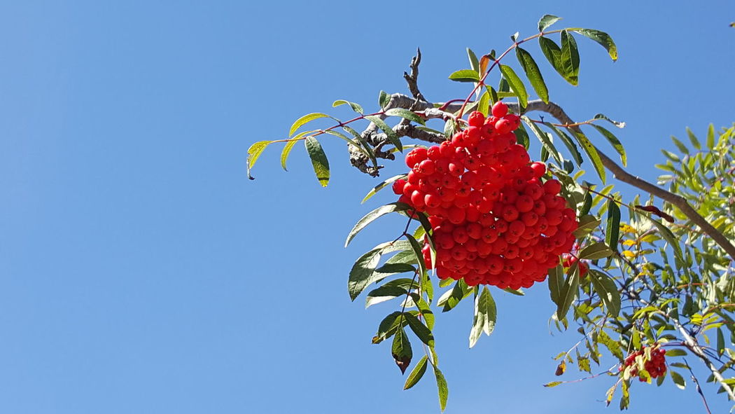 Berry Berries Collection red Blue Sky blue Outdoors Outdoor Photography