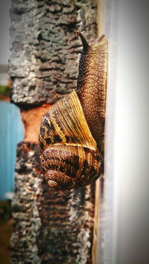 Snail🐌 Nature Shell Adventure