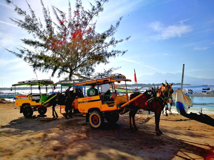 Cidomo at Gili Trawangan, Lombok Outdoors Beach Life Transportation Horse Love Cidomo Gili Trawangan-lombok