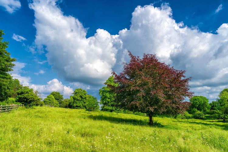 Dean's Meadow,