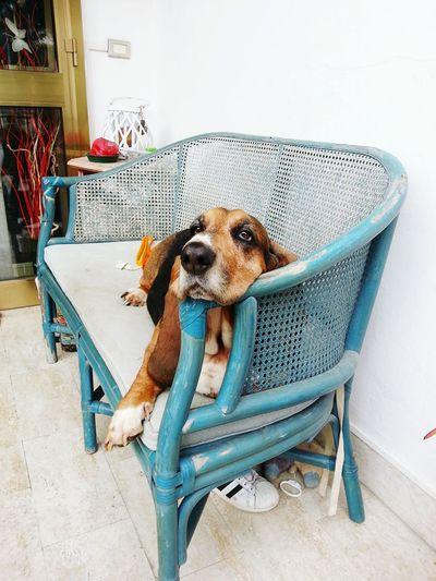 Dog's life Chilling Dog Dogs Of EyeEm Bench Bench Lover  Bassetthound Basset Hound Eyeemphoto