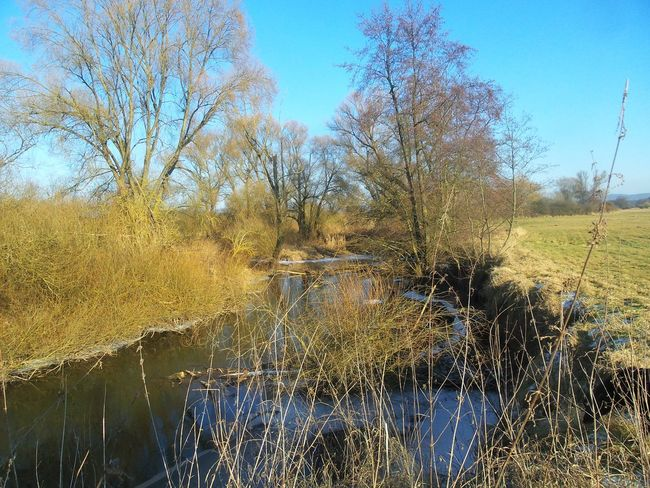 Water And Ice Little Stream Creek View Sunny Winter Day In The Creekbed Blue Sky Bare Trees Trees Water Wet Outdoors Day Nature Beauty In Nature Close-up No People Countryside Contry Living Kinzig River Langenselbold Germany🇩🇪