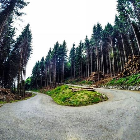 Monte Cavalletto, Veneto, Italy Summer Italy Veneto Nature Naturelovers Wood Forest Road Mountains Trail Hike Adventure Wanderlusting Visitveneto Igersveneto Igersvicenza Igveneto Ig_countryside Igworldclub_country Gopro Goprouniverse Goproeverything Goprolovers Goprolife Gopro_moments