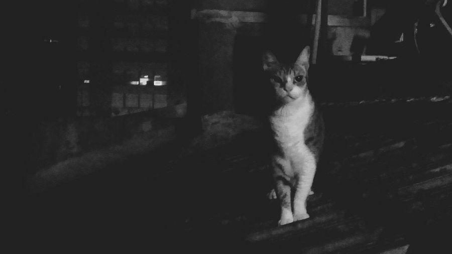 Gato Cebolinha da amiga Juliana... Cat♡ Cat Lovers Cute Cats Catsofinstagram Catlovers
