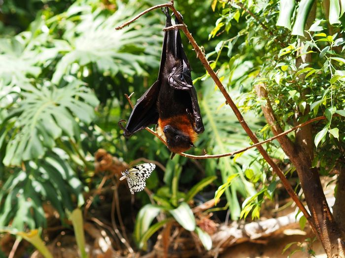 Fruit bat and butterfly Batman And Robin Animals First Eyeem Photo