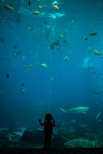 Man swimming in fish tank at aquarium