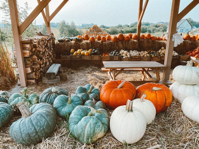 View of pumpkins