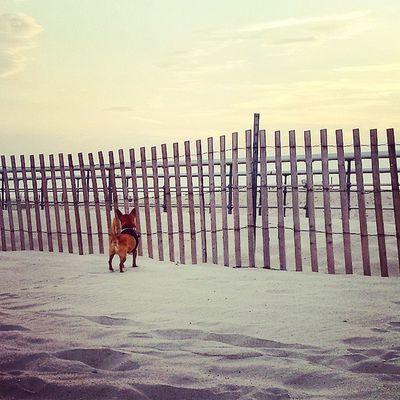 Sandy pup Dailyzigga Saltydog