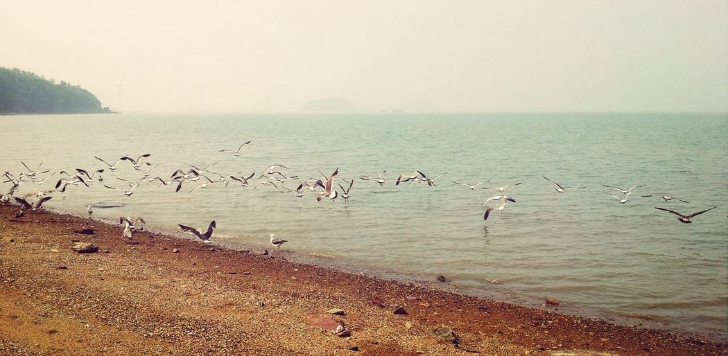 Seagulls Beach Island Korea OpenEdit Open Edit