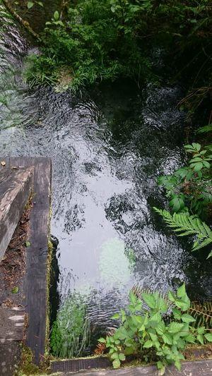 Reflejos Water