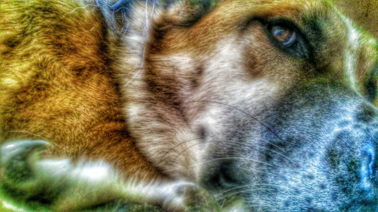 one animal, no people, animal themes, close-up, mammal, day, indoors