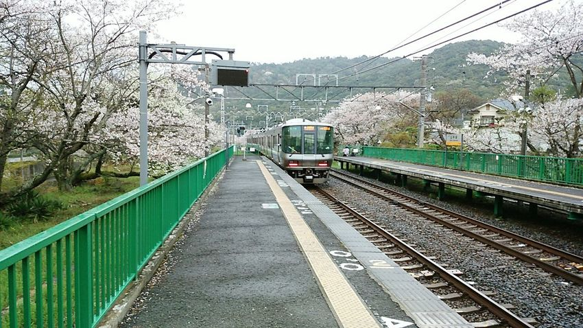 2015-4-4 Hello World Hanami Charry Flowers Japan Photography Emotional Sakura Trees Nature Railway Station Osaka Japan Ultimate Japan