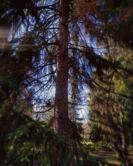 Wiosna Park Parkszczytnicki Wroclaw Igerswroclaw Wiewiorka Spring Squirrel