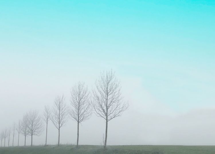 Row of trees Trees Row Of Trees Plant Tree Tranquility Sky Beauty In Nature Tranquil Scene Scenics - Nature Environment Nature Landscape Copy Space Field Bare Tree Land Fog Day No People Non-urban Scene Outdoors Growth