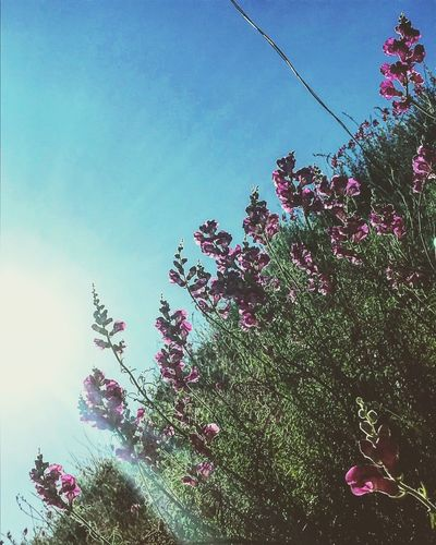 Sky Plant Low Angle View Nature Growth Flower Tree Flowering Plant Beauty In Nature No People Vulnerability  Freshness Plant Part Sunlight Clear Sky Leaf Day Outdoors Fragility Blue
