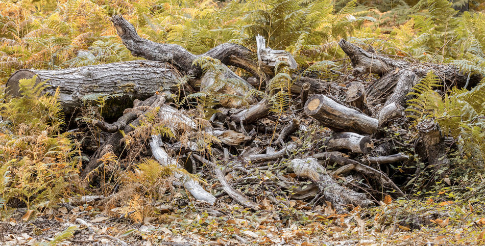 Logs Tree Surgery Bark Day Dead Plant Deforestation Environmental Issues Fallen Tree Falling Field Forest Forset Land Log Nature No People Outdoors Plant Timber Tranquility Tree Tree Trunk Wood Wood - Material WoodLand