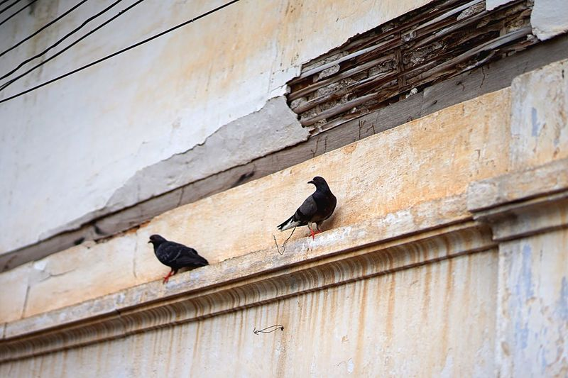 Low angle view of pigeons perching on wall