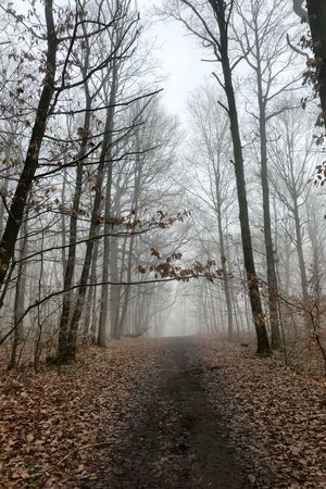 Chemin noir Tree Plant Forest Nature Land No People Tranquility Tranquil Scene Fog Tree Trunk Non-urban Scene