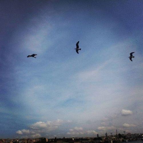 Fly a way! Momentefaine Day318 Erasmusexperienceday16