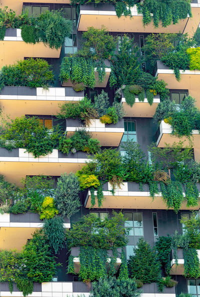 Apartment Architecture Building Building Exterior Built Structure City Day Full Frame Green Color Growth High Angle View House In A Row Nature No People Outdoors Plant Potted Plant Residential District Tree Window