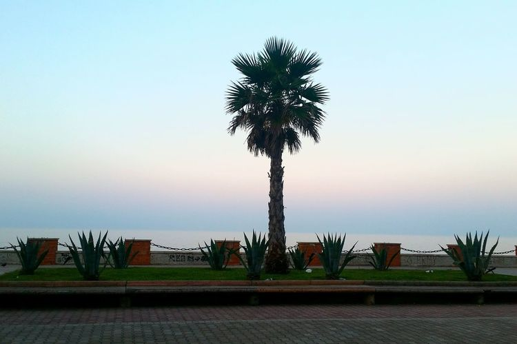 Freshair Beforedawn Meditating Relaxed And Happy Thoughtful Enjoying The View Lovely View Paradise On Earth Durres Albania PhonePhotography