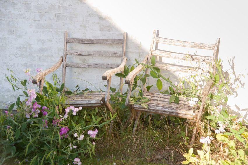 Garden Chair in Bisserup Denmark The Essence Of Summer
