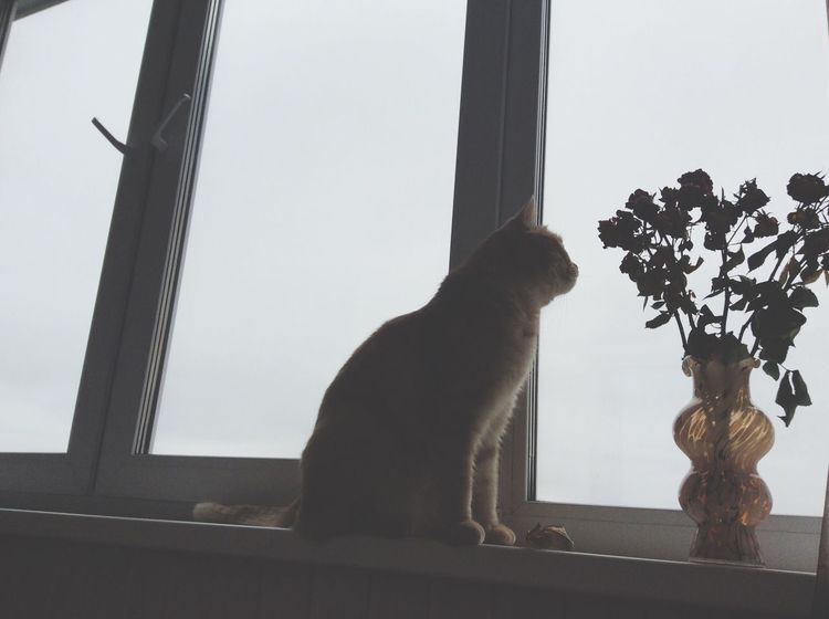 One more pic with my cat😻 One Animal Animal Themes Pets Window Domestic Animals Indoors  Mammal Zoology Cat Feline Domestic Cat Window Sill At Home Curiosity Day In Front Of Animal Loyalty No People