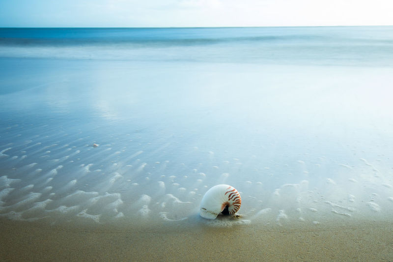 Seashell At Shore